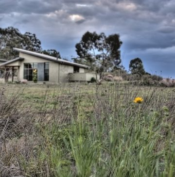 Alure Stanthorpe Villas with wildflowers